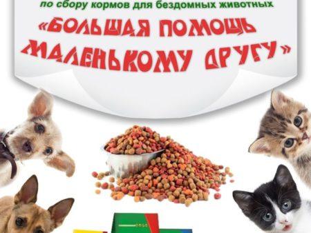 Новогодний подарок для бездомных животных